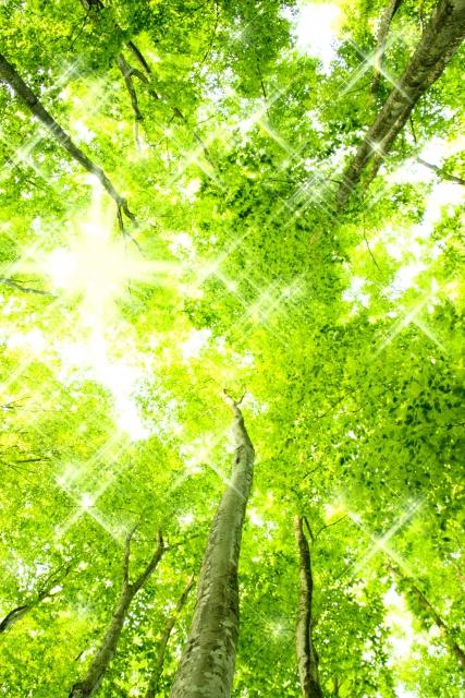 新緑,森林,呼吸