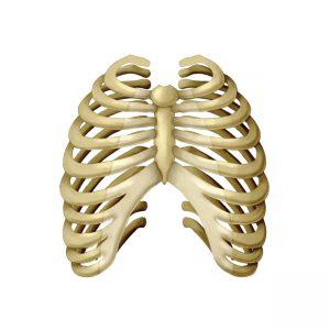 骨,胸,呼吸